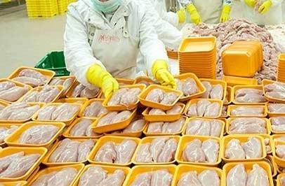 تبلور دوستی عراقی ها با بالابردن تعرفه گوشت مرغ ایرانی!