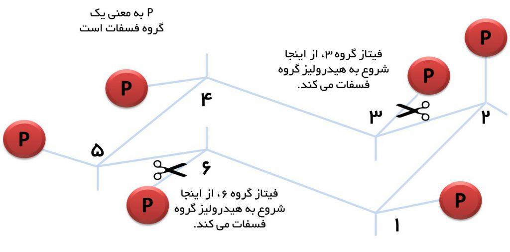 فیتاز 3 و 6
