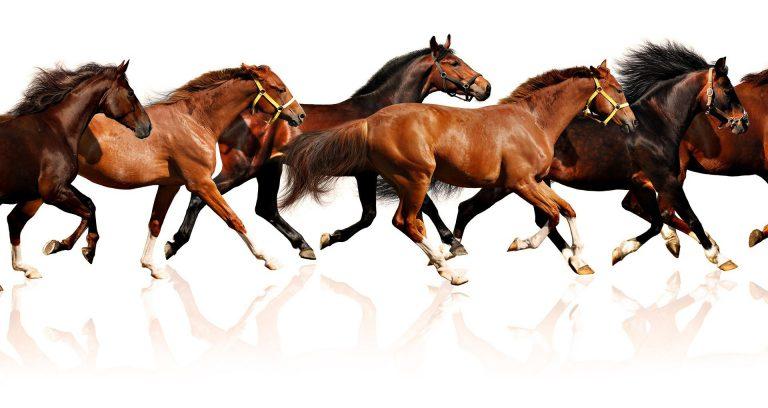 اسب سانان